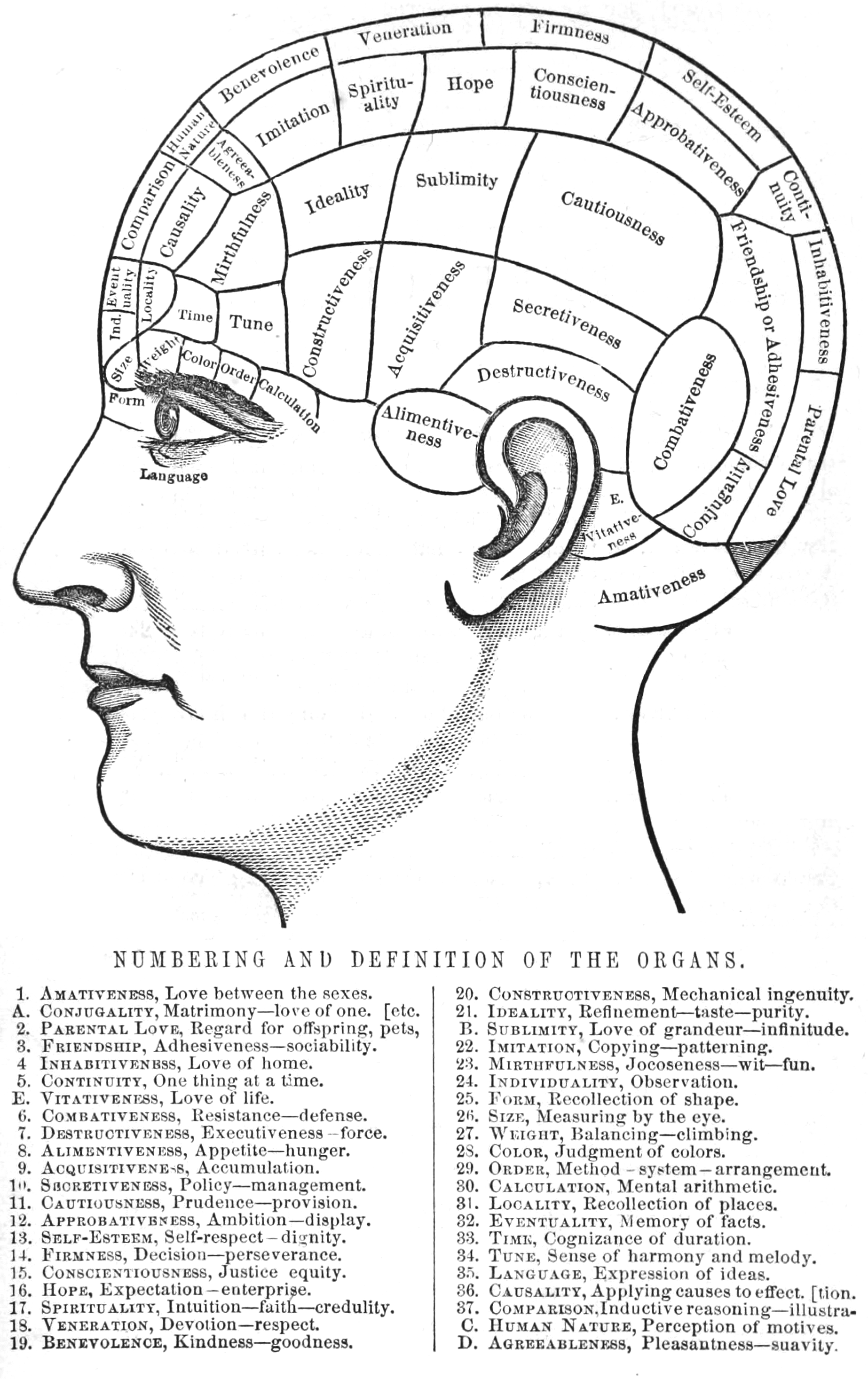 Phrenology—Numbering_and_Definition_of_the_Organs.png